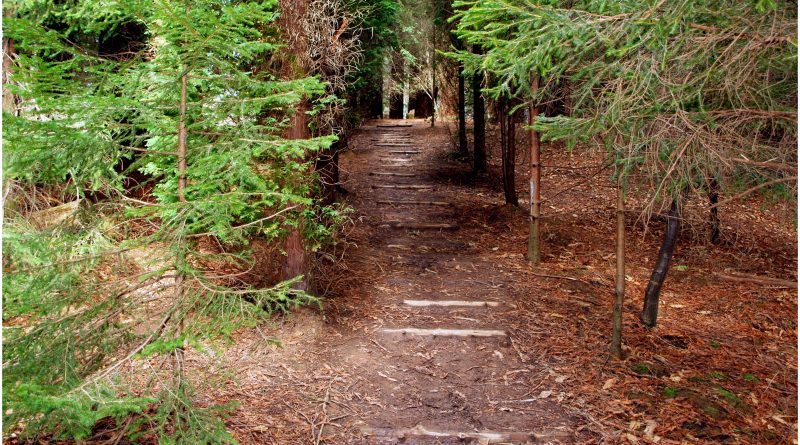 bosque-secuoyas-243-800x445 Un Bosque de Secuoyas en Cantabria!. Rutas