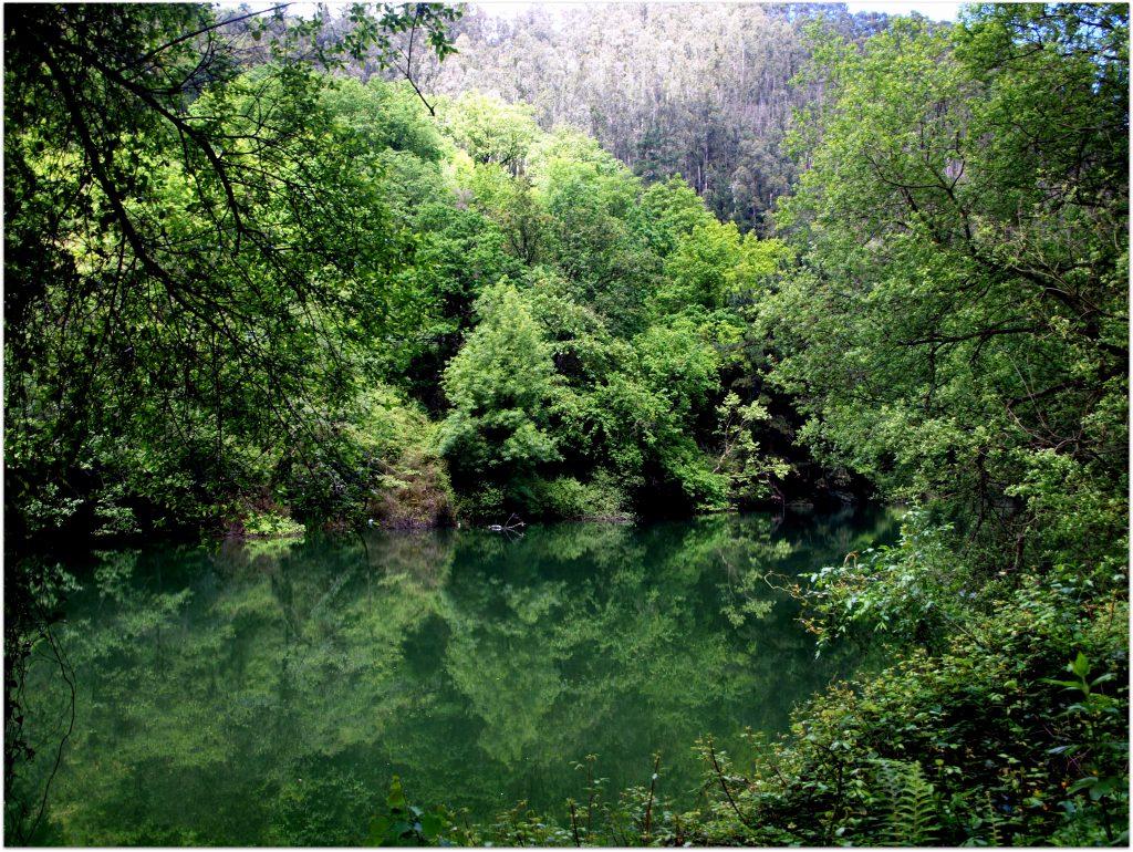 P5012744-1024x770 Camino del Agua - Ruta El Regato Rutas