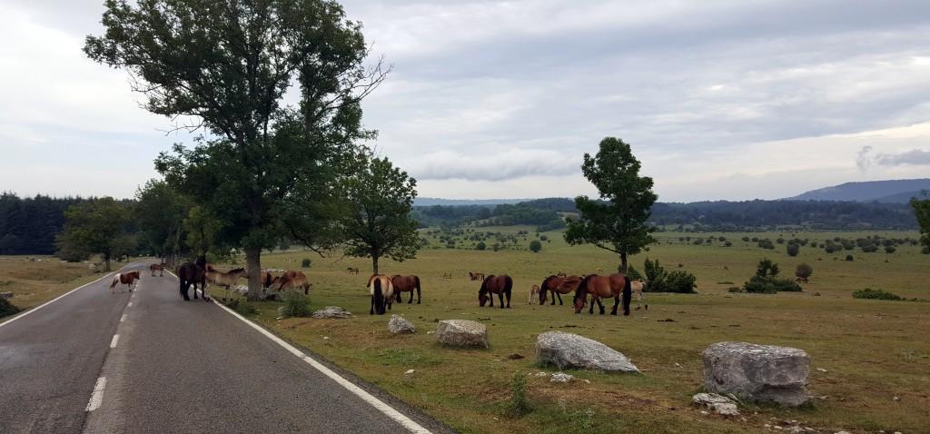 20150718_102654-1024x478 Sierra de Urbasa. Urederra y Bosque Encantado (I) Rutas