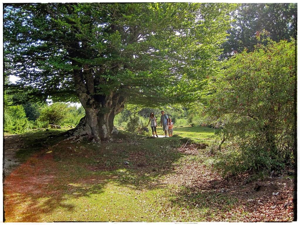IMG_9036-1024x768 Sierra de Urbasa. Urederra y Bosque Encantado (I) Rutas