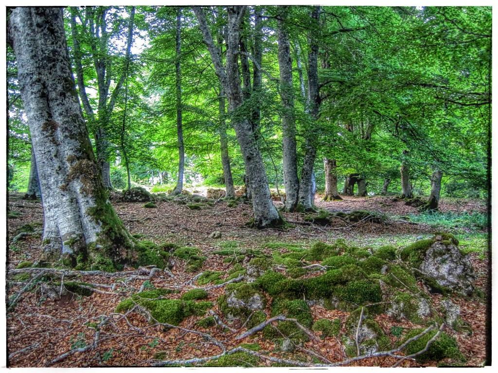 IMG_9046-1024x768 Sierra de Urbasa. Urederra y Bosque Encantado (I) Rutas