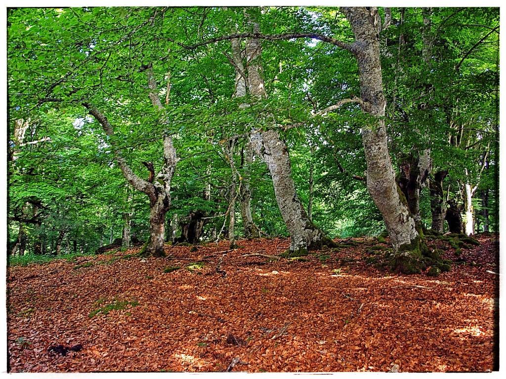 P7185888-1024x768 Sierra de Urbasa. Urederra y Bosque Encantado (I) Rutas