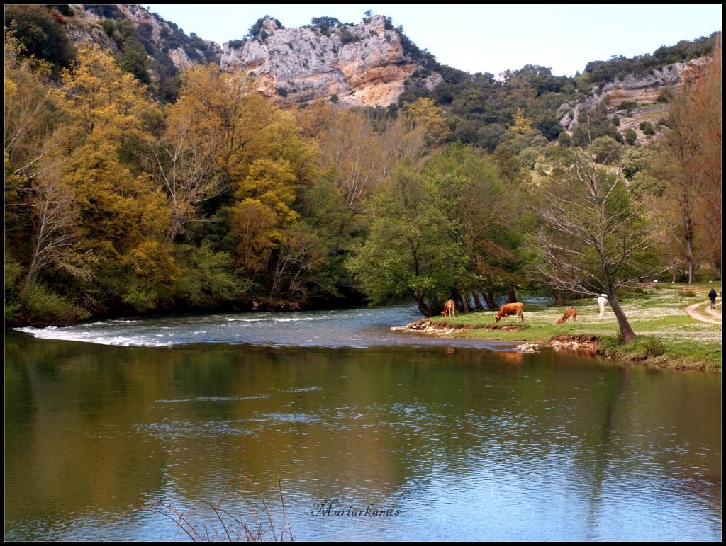 Tudanca216-1024x771 De paseo por Las Merindades Rutas