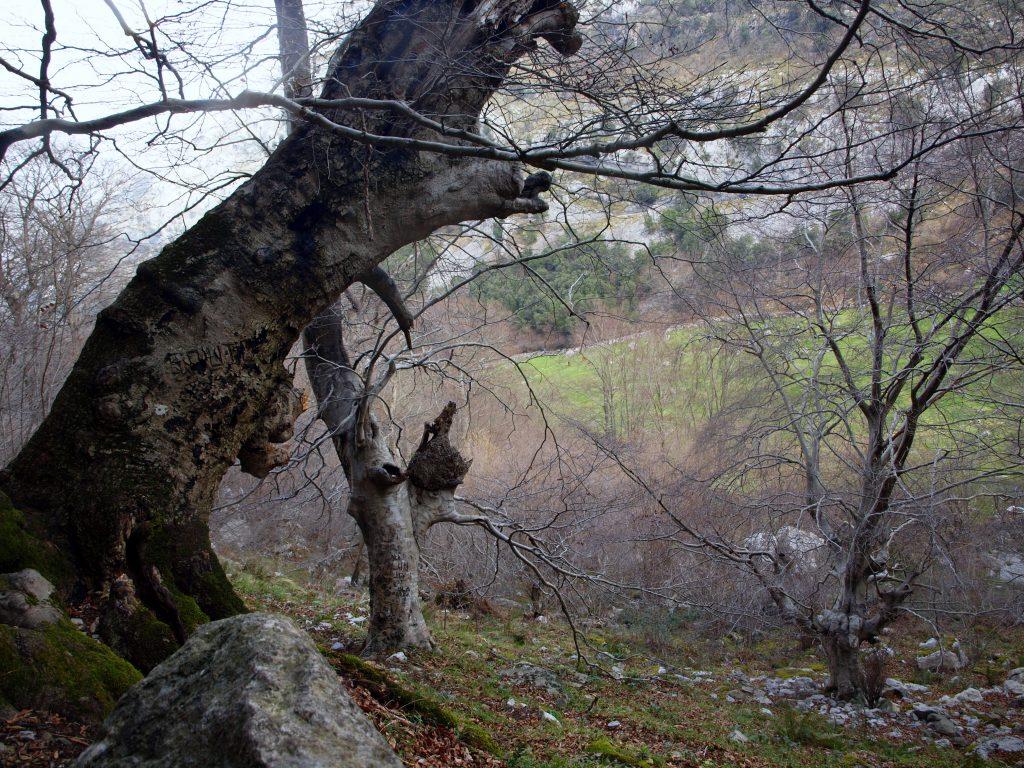 P3119065-1024x768 De ruta por los valles de Ason y Soba Rutas