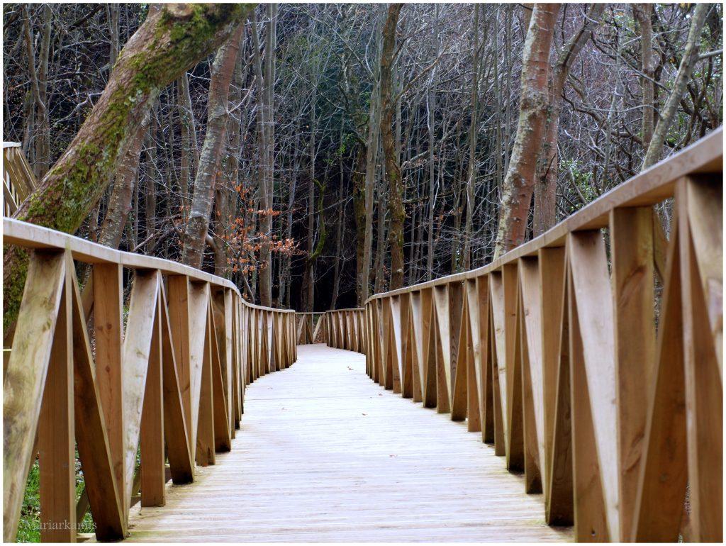 bosque-secuoyas-230-1024x770 Un Bosque de Secuoyas en Cantabria!. Rutas
