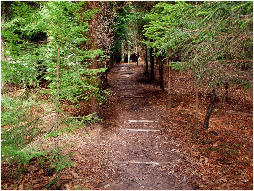 bosque-secuoyas-243-1024x769 Un Bosque de Secuoyas en Cantabria!. Rutas
