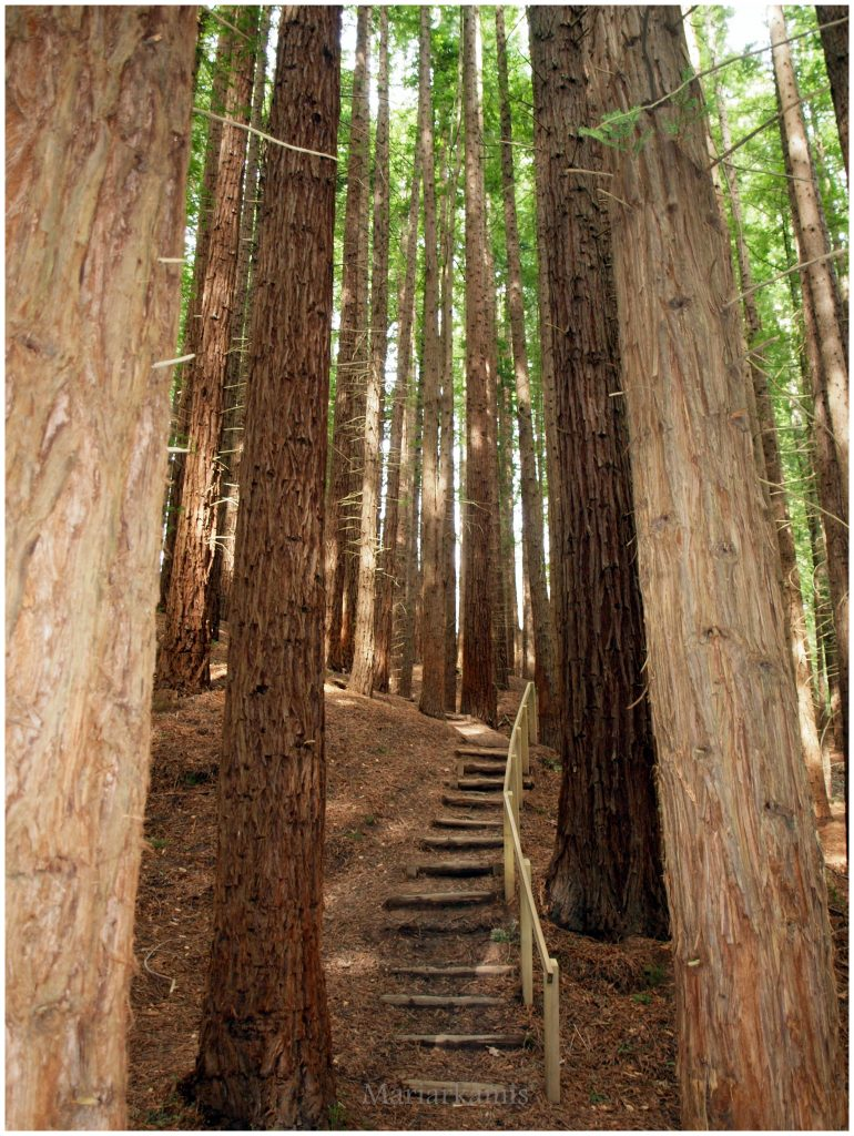 bosque-secuoyas-269-770x1024 Un Bosque de Secuoyas en Cantabria!. Rutas