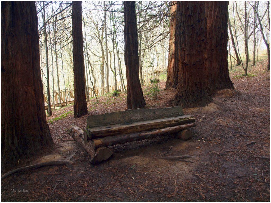 bosque-secuoyas-275-1024x770 Un Bosque de Secuoyas en Cantabria!. Rutas