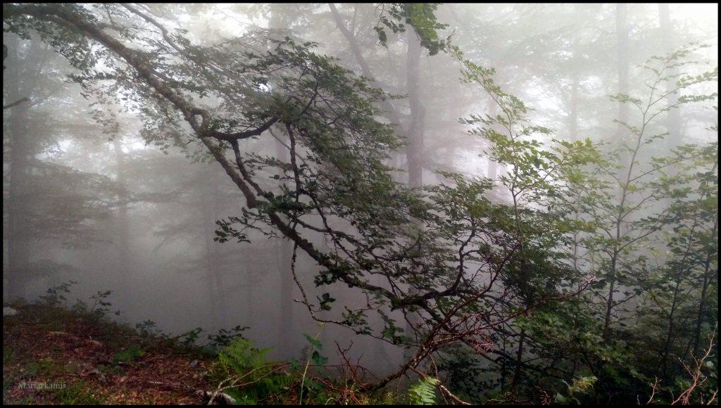 IMG_20170708_172557-1-1024x580 Navarra. Dia 1: Foz de Lumbier y Selva de Irati Viajes