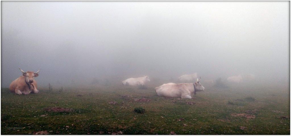 IMG_20170708_172848-1-1024x477 Navarra. Dia 1: Foz de Lumbier y Selva de Irati Viajes