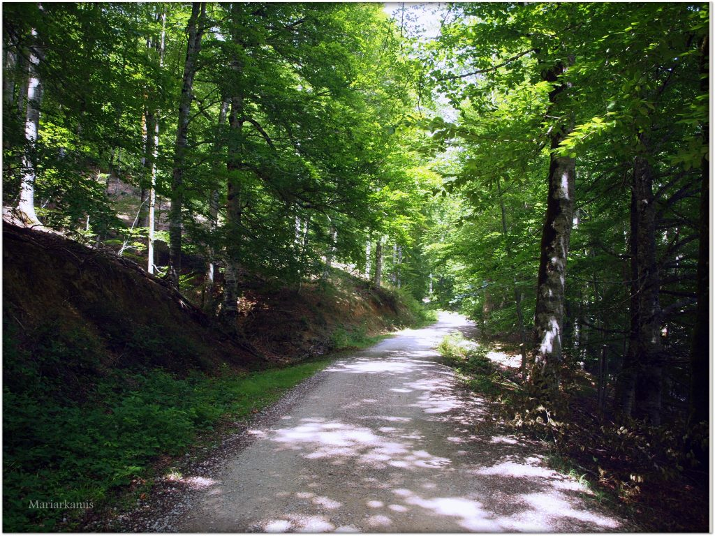 P7080438-1-1024x768 Navarra. Dia 1: Foz de Lumbier y Selva de Irati Viajes