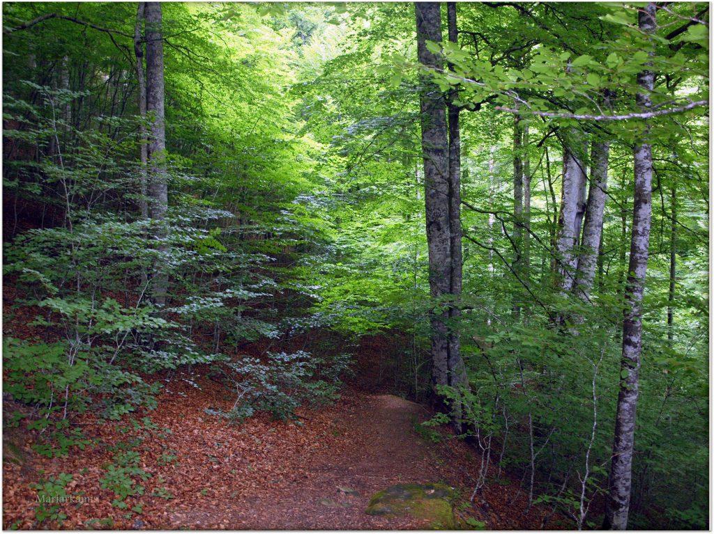P7080465-1-1024x767 Navarra. Dia 1: Foz de Lumbier y Selva de Irati Viajes