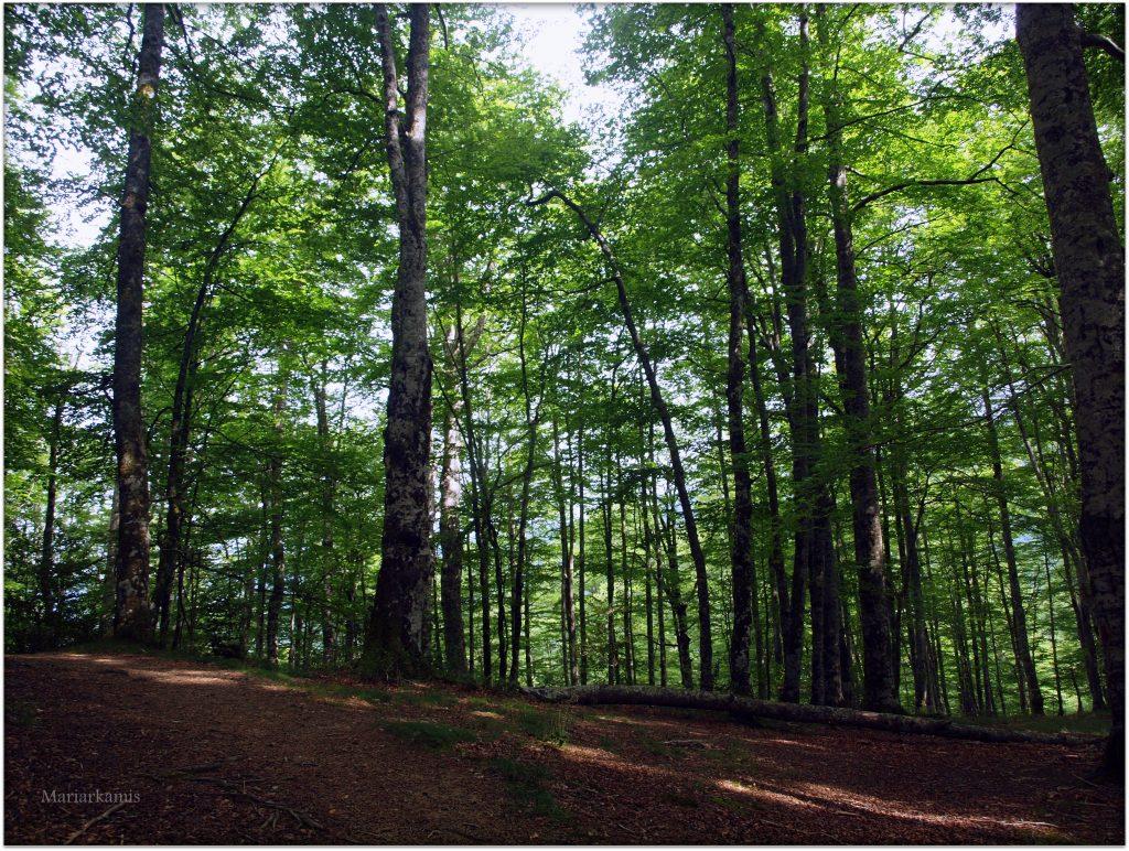 P7080474-1-1024x772 Navarra. Dia 1: Foz de Lumbier y Selva de Irati Viajes