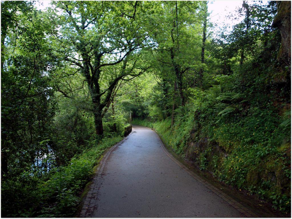 P5012732-1024x770 Camino del Agua - Ruta El Regato Rutas