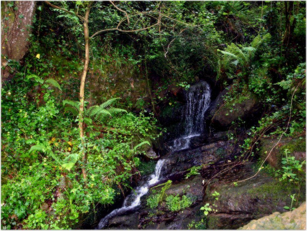 P5012739-1024x770 Camino del Agua - Ruta El Regato Rutas