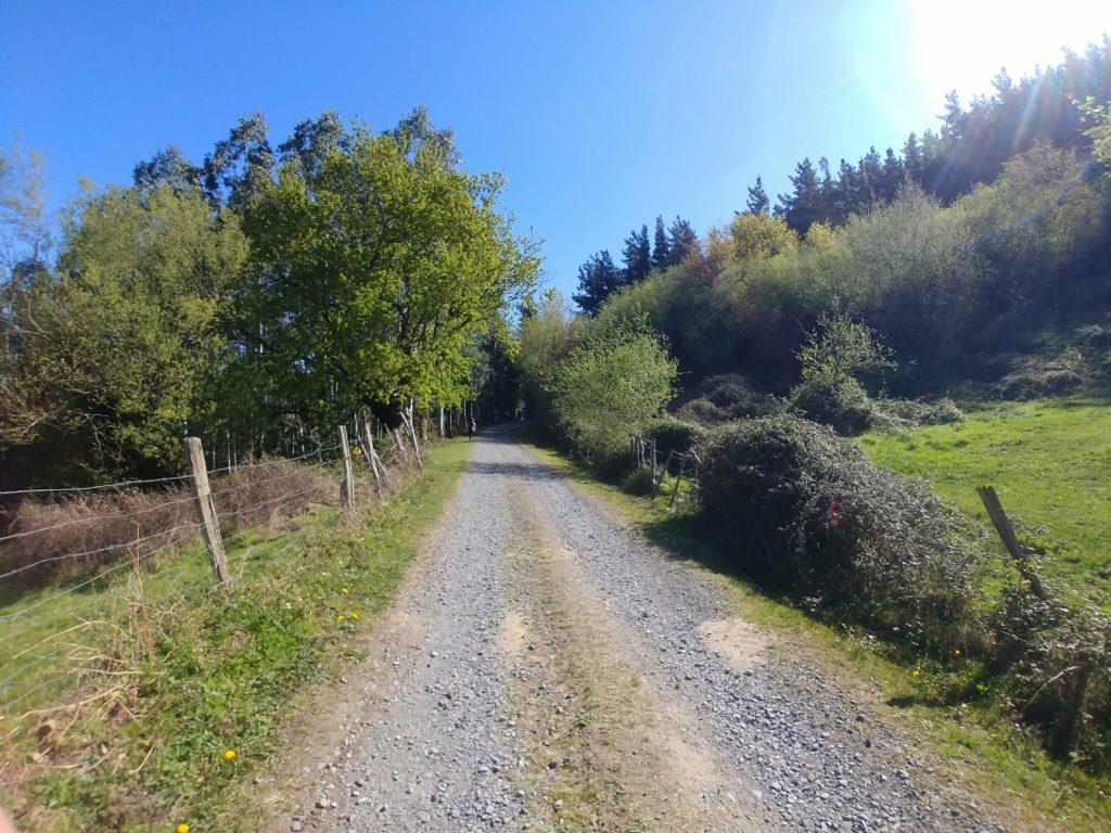 20210405_120244-01-1024x768 El hayedo de Balgerri, el más extenso de Bizkaia Rutas