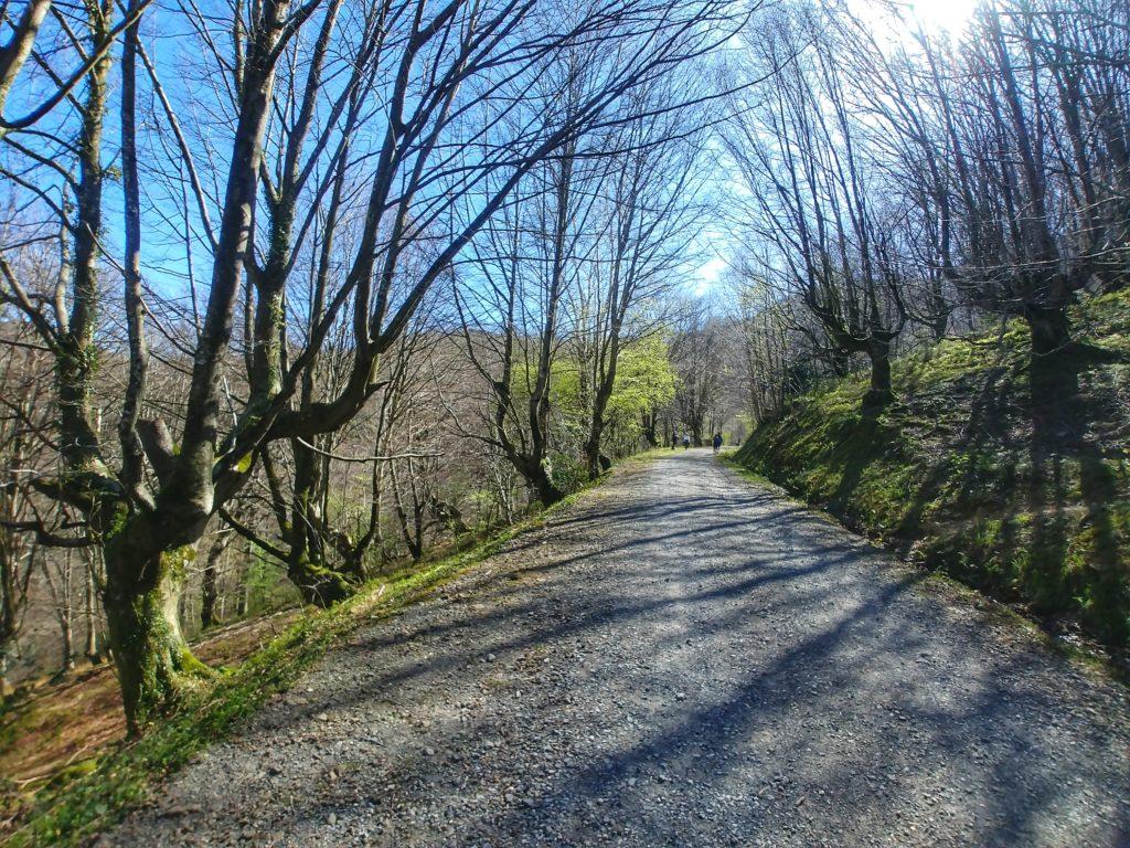 20210405_123202-01-1024x768 El hayedo de Balgerri, el más extenso de Bizkaia Rutas